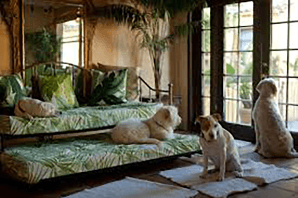 Four dogs in a lovely room with daybed and trundle.