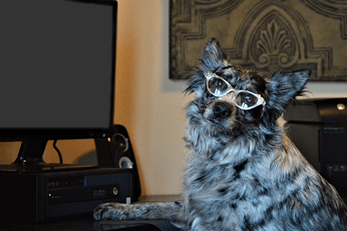 Dog wearing glasses while working at the PlayStayTion Pet Resort and Training computer