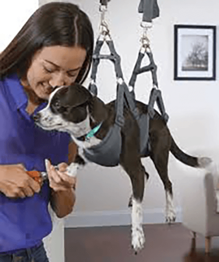 Dog in a special sling for nail trimming