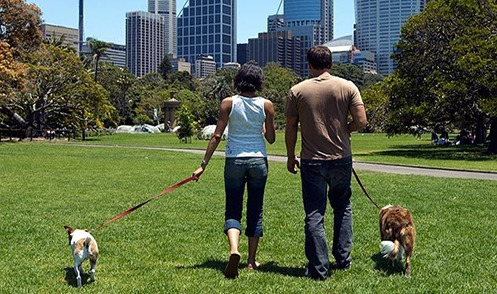 Dogs at the City Park
