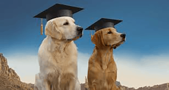Two dogs with graduate's mortar boards on their heads.