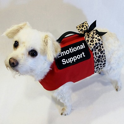 Emotional Support Dog wearing vest