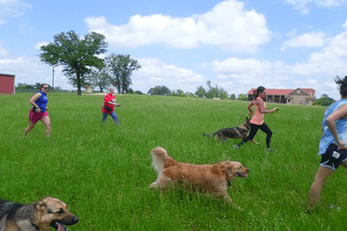 multiple dogs and their owners walking in a field off-lead