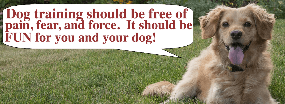 Dog training should be free of pain, fear, and force. It should be fun for you and your dog.