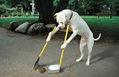 A dog scooping poop