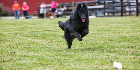 A dog running happily. Does the facility allow your dog enough exercise?