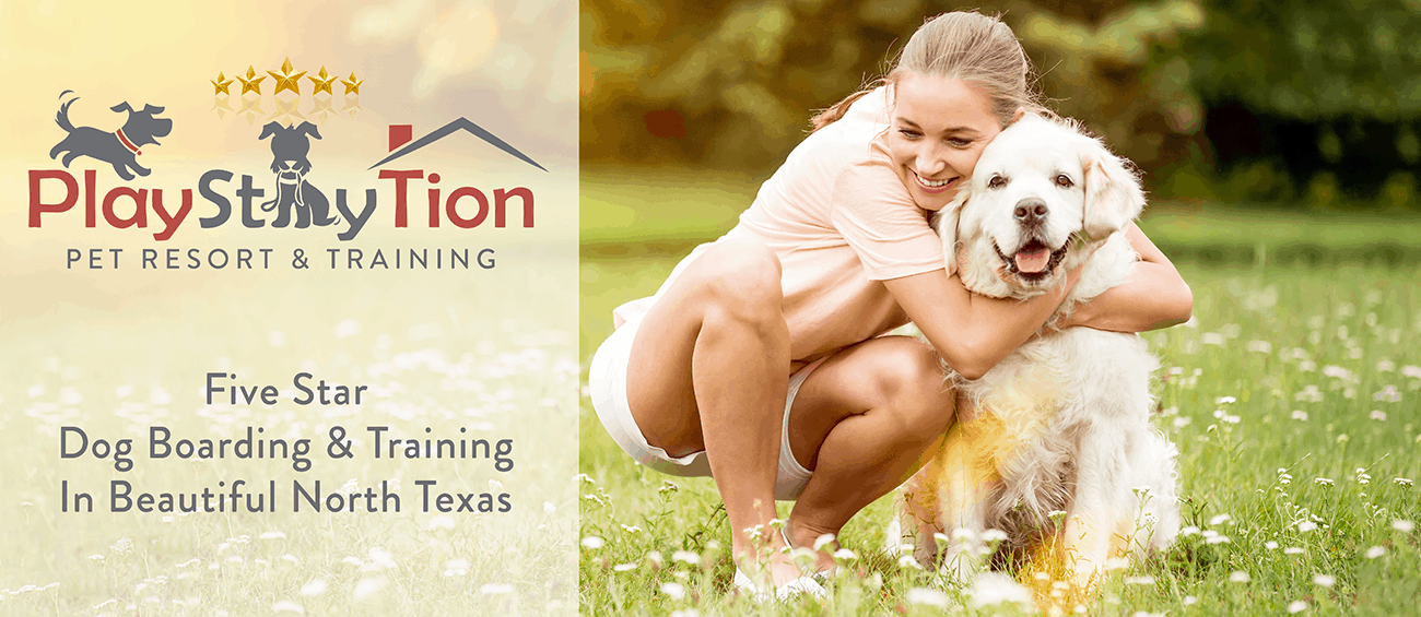 PlayStayTion Pet Resort and Training. Five-Star Services for dog boarding, grooming, and training in North Texas.